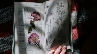 日経新聞を無料で読む方法【ざっくり解説】
